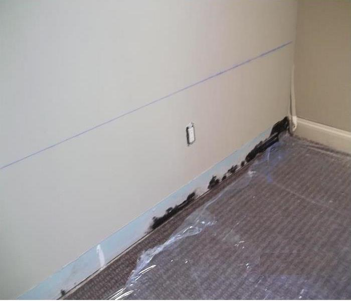 Mold Infestation in Riverhead, NY Before