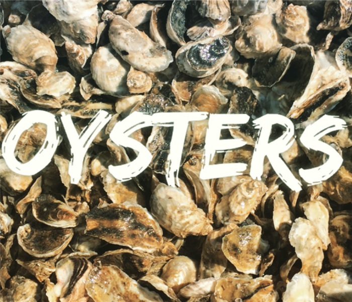 bunch of oysters with lettering