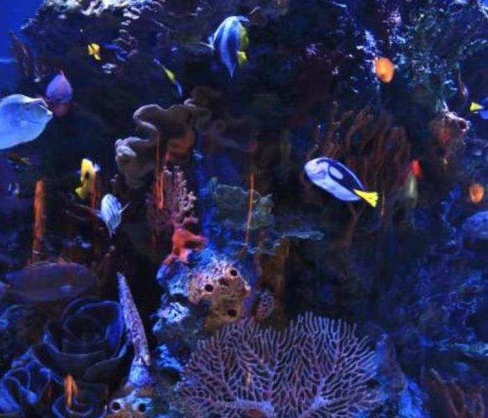 An aquarium with fish.